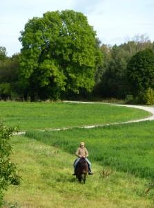 Ridekunsten er en vej, hvor hest og rytter udvikles hele livet.
