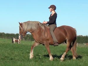 Basic Art of Riding hjælper dig og din hest til balance og sund bevægelse, uanset om du mest er skovrytter eller er banerytter.