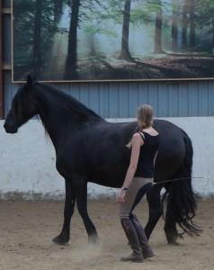 At hest og rytter 'sammensmelter' og bliver til en fælles bevægelse, gør det meningsgivende at møde egen krop, med opmærksomhed, kærlighed og bevægekompetance-udvidende arbejde. Præcis som vi møder vores heste. <3